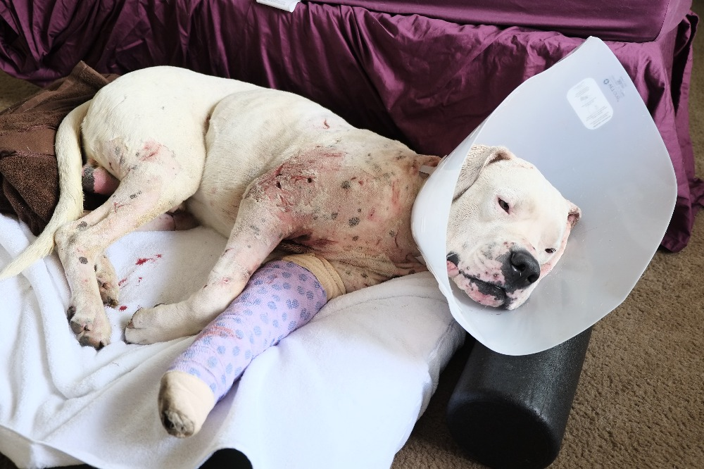 Fundraiser by Alexander Newell : Marco's Vet Bills - Vicious Attack
