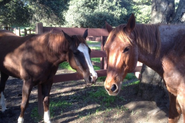 Ranch forgotten horse sanctuary by roz rf bailey gofundme for Sanctuary ranch