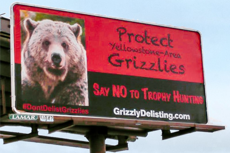 Protect our Grizzlies Billboard