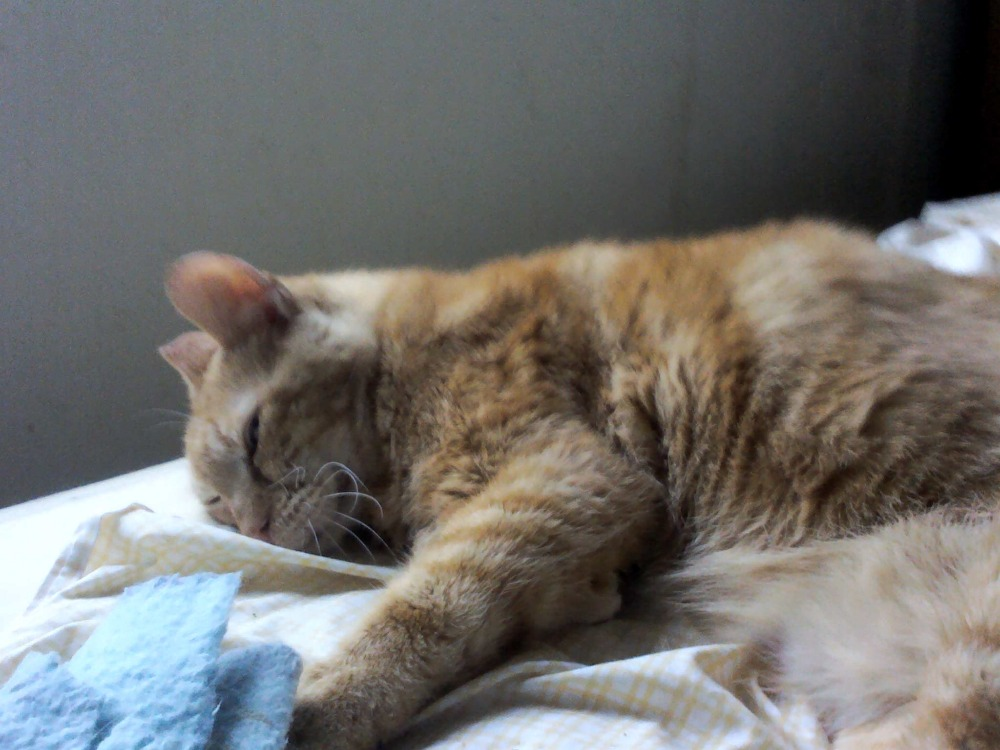 Rescue Cat Has Cancer Nasal Lymphoma