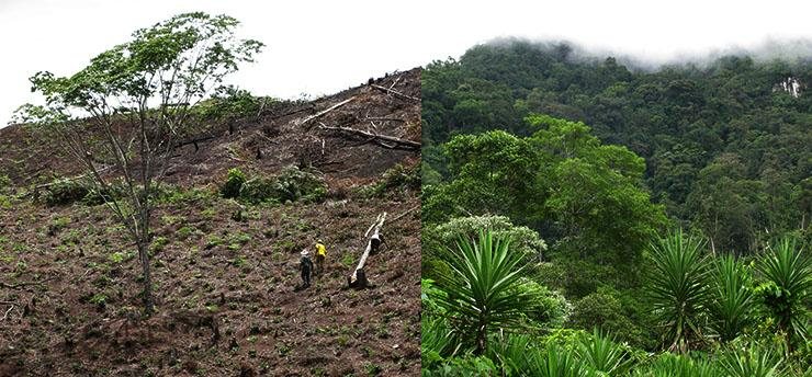 exploring the impact of deforestation