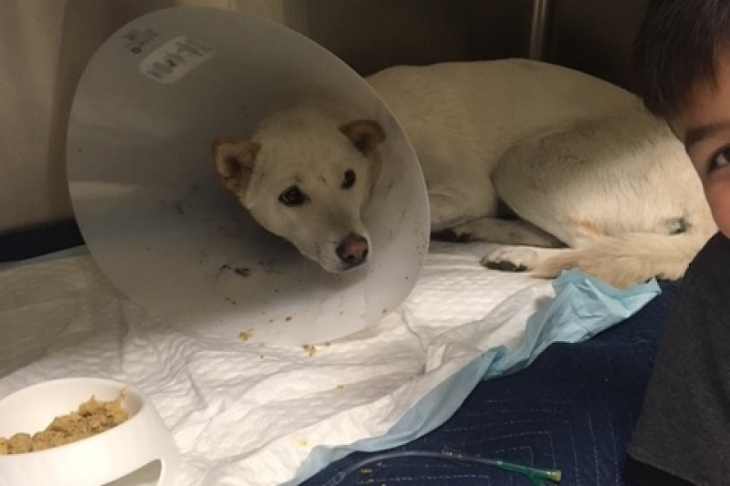 EMERGENCY Meat Trade Jindo POISONED by Maureen Delaney - GoFundMe