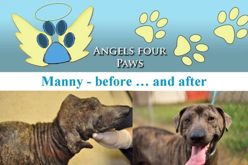 Paws Angels Dog Rescue