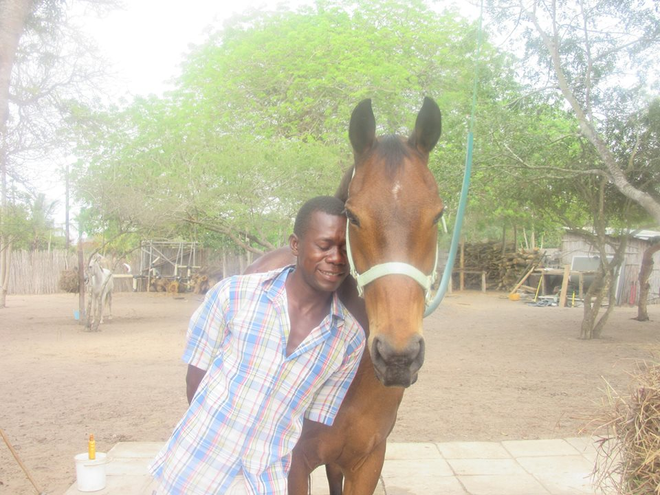 Donate to Help the horses of the Mozambique Horse Safari survive the drought!